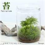 (観葉)苔Terrarium コウヤノマンネングサ ガラスボトルL 説明書付 テラリウムキット 本州・四国限定