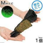 (水草)巻きたて ロックウール付 ヘアーグラスショート 流木 Mサイズ(無農薬)(1本)(約20cm) 北海道航空便要保温