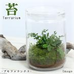 (観葉)苔Terrarium ブセファランドラ ガラスボトルL 説明書付 テラリウムキット 本州・四国限定