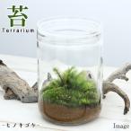 (観葉)苔Terrarium ヒノキゴケ ガラスボトルL 説明書付 テラリウムキット 本州・四国限定