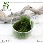 (観葉)苔Terrarium 苔ミックス 蓋付カップL 説明書付 テラリウムキット 本州・四国限定