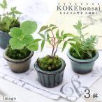 (観葉)苔盆栽 おまかせ山野草 豆鉢植え(3鉢)