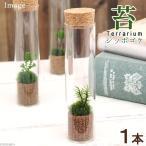 (観葉)苔Terrarium シッポゴケ スリムガラス 説明書付 テラリウムキット 本州・四国限定