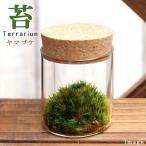 (観葉)苔Terrarium ヤマゴケ コルクボトル ミニ 説明書付 テラリウムキット 本州・四国限定