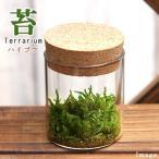 (観葉)苔Terrarium ハイゴケ コルクボトル ミニ 説明書付 テラリウムキット 本州・四国限定