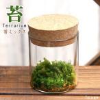 (観葉)苔Terrarium 苔3種セット コルクボトル ミニ 説明書付 テラリウムキット 本州・四国限定