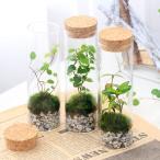 (観葉植物)苔Terrarium インテリアプランツ スタンドガラス 北海道冬季発送不可