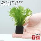 (水草)メダカ・金魚藻 マルチリング・ブラック(黒) アナカリス ミニ(5個) 北海道航空便要保温