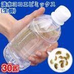 (生餌)淡水ヨコエビミックス(30匹)北海道・沖縄航空便要保温