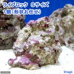 (海水魚)ライブロック Sサイズ(1個)(形状お任せ) 北海道・九州・沖縄航空便要保温