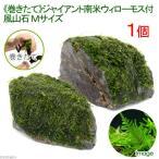 (水草)巻きたて ジャイアント南米ウィローモス 風山石 Mサイズ(無農薬)(1個)
