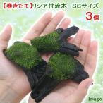 (水草)巻きたて リシア付き流木 SSサイズ(無農薬)(3本)