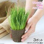 観葉植物-商品画像