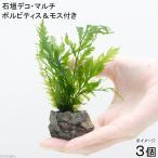 (水草)石垣デコ・マルチ ボルビティス&モス付き(無農薬)(3個)