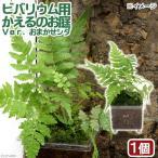 (水草 両生類)ビバリウム用 かえるのお庭 スタックエス寄せ植え(水上葉)(無農薬)(1個)