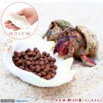 (海水魚 貝殻)シェルコレクション シャコガイ ミックス MLサイズ(1枚)(形状お任せ) オカヤドカリ食器
