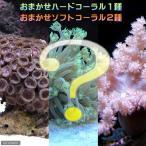 (海水魚 サンゴ)おまかせソフト2種+ハード1種セット Sサイズ 北海道・九州・沖縄航空便要保温