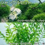 (水草)ジャングルセット(無農薬)(1セット)