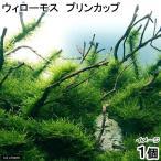 (水草)ウィローモス プリンカップ(無農薬)(1個)