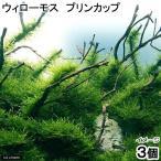 (水草)ウィローモス プリンカップ(無農薬)(3個)