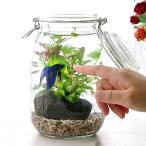 (熱帯魚 水草)私の小さなアクアリウム 〜ベタと水草の共演〜 水草と生体キット 1セット 説明書付き 本州・四国限定