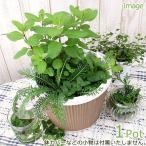 (観葉植物)ミニハーブガーデン(ハーブの寄せ植え) 品種おまかせ(1鉢) 家庭菜園