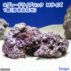 (海水魚)Sグレードライブロック Mサイズ(1個)(形状お任せ) 北海道・九州・沖縄航空便要保温
