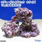 (海水魚)Sグレードライブロック Sサイズ(1kg)(形状お任せ) 北海道・九州・沖縄航空便要保温