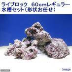 (海水魚)ライブロック 60cmレギュラー水槽セット(形状お任せ) 北海道・九州・沖縄航空便要保温