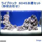 (海水魚)ライブロック 6045水槽セット(形状お任せ) 北海道・九州・沖縄航空便要保温