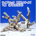(海水魚)ライブロック 枝状Mサイズ(1個)(形状お任せ) 北海道・九州・沖縄航空便要保温