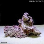 (海水魚)組上済み 養殖ライブロック Mサイズ(形状お任せ) 北海道・九州・沖縄航空便要保温