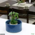 アウトレット品 手作り水鉢 涼 瑠璃紺(るりこん)● 訳あり 関東当日便