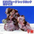 (海水魚)ライブロック EXSグレード レッドロック Mサイズ(1個)(形状お任せ) 北海道・九州・沖縄航空便要保温