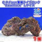 """(海水魚)C.P.Farm 養殖ライブロック""""BaseRock"""" Lサイズ 1個(形状お任せ) 北海道・九州航空便要保温"""
