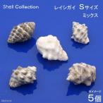 (海水魚 貝殻)シェルコレクション レイシガイ ミックス Sサイズ(5個)(形状おまかせ)