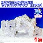 (海水魚)C.P.Farm バクテリア付きライブロックレプリカ LLサイズ 1個(形状お任せ) 北海道航空便要保温
