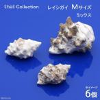 (海水魚 貝殻)シェルコレクション レイシガイ ミックス Mサイズ(6個)(形状おまかせ)