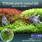 (水草 熱帯魚)おまかせ水上葉 レイアウトセット 60cm水槽用 8種(無農薬)(1パック)(水草説明書付) 基本送料無料 北海道航空便要保温