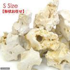 化石サンゴ S(ベース用)1個 15〜20cm 関東当日便