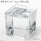 ガラスベース ニューブロックL エアプランツ 多肉植物 ティランジア ガラス 関東当日便