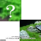 水草(前景草)