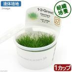 (水草)組織培養1−2−GROW! ヘアーグラスショート (液体培地) トロピカ製(無農薬)(1カップ)