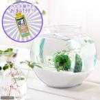 (水草)私の小さなアクアリウム 〜窓辺のノチドメボール〜 アメリカ製ドラム金魚鉢 小 本州・四国限定 お一人様3点限り