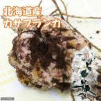 (観葉)超特大ゆり球根 北海道産  カサブランカ 30cmUP 1球