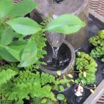 (観葉/盆栽)水の音 〜癒しを運ぶ観葉庭園へのいざない〜 観葉コケ玉2個付きセット 本州・四国限定