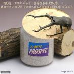 (昆虫)ギラファノコギリクワガタ(フローレス産)幼虫(1匹) + 大夢B プロスペック 800cc(1本)(説明書付) 本州・四国限定