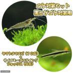 (エビ・貝)コケ対策セット 黒ヒゲゴケ対策用 ヤマトヌマエビ(10匹) + サイアミーズフライングフォックス(4匹)