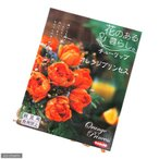 (観葉)チューリップ球根 花のある暮らし。人気上昇中品種シリーズ オレンジプリンセス 8球詰(1袋)