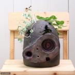 (観葉)おまかせ観葉とジブリプランター 〜ロボット兵の思い〜 観葉の土・鉢底石付き 説明書付き